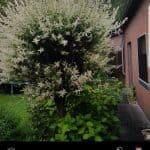 Galaxy S8 review camera UX